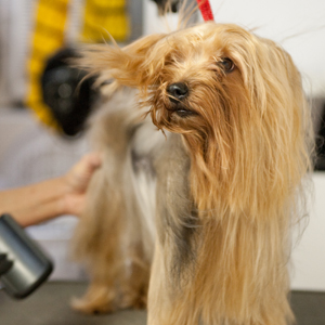 Give your dog a blow dry